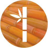 Sugar Cane Icon